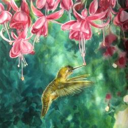 Hummingbird & Fuschia