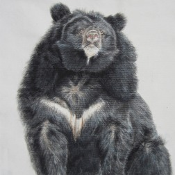 Taiwanese Black Bear